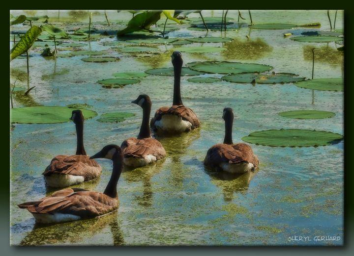 Drifting Away - Sheryl Gerhard