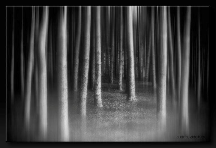 The Dark Wood - Sheryl Gerhard