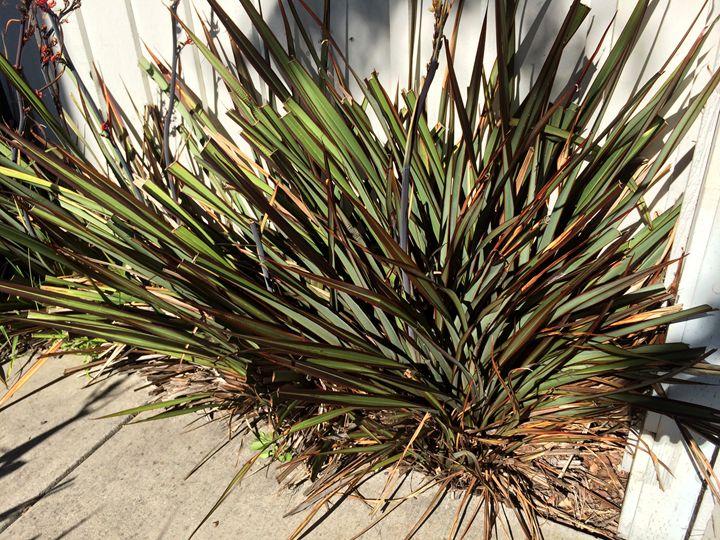 spike plant - Benji Friedman