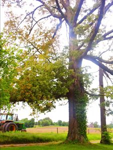 Tree and Tractor