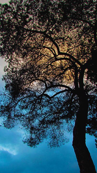 Tree Silhouette - SLM Designs