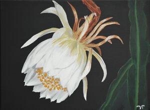 Nigh blooming flower - Van Titlow