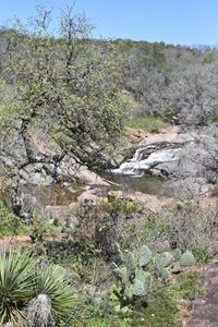 Cacti at Spring Creek Falls
