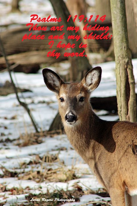 Close Encounter Inspirational - Nature and Wildlife Art