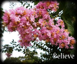 Pink Crepe Myrtle-Believe