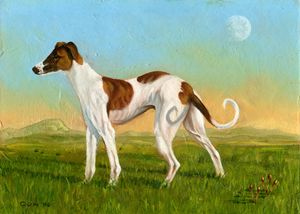 Tri-coloured Greyhound