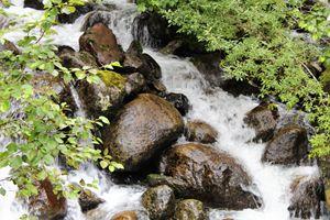 Alaskan Rain Forest Stream