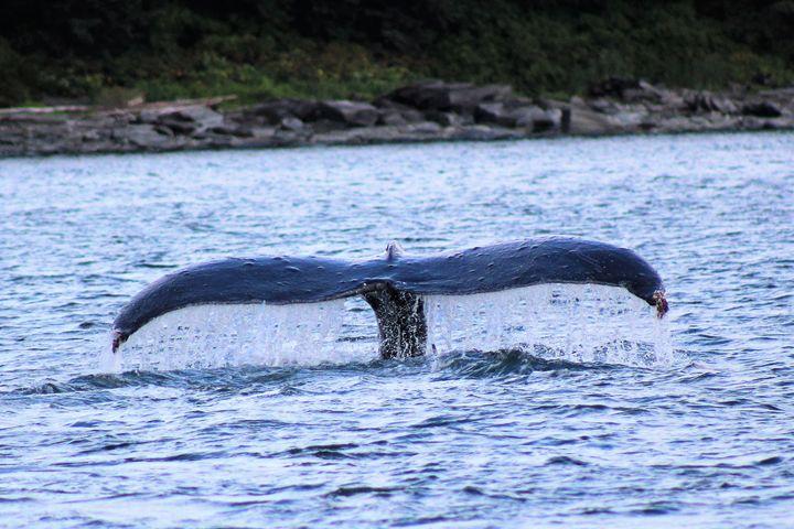 A Whale's Tail - Pat Hansen's Photos