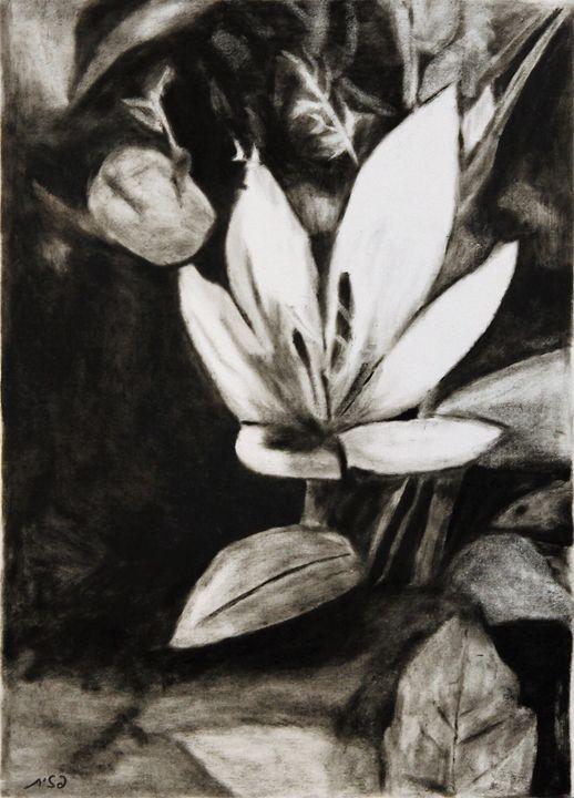 The flower - Pazit Goldstein