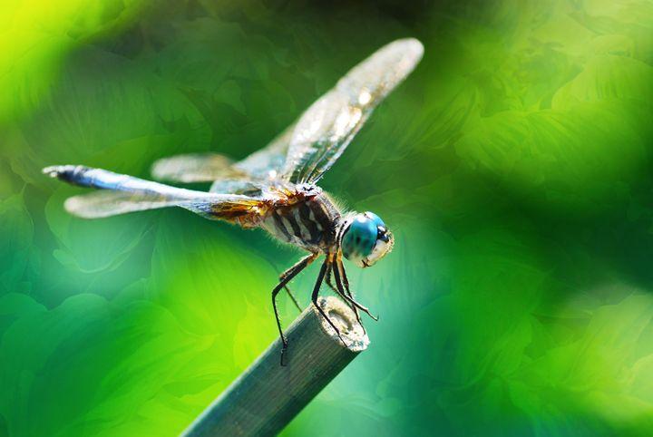 Dragonfly - Don Wright Fine Art & Photoraphy