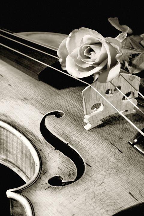 Violin 5548..059 - M K Miller III