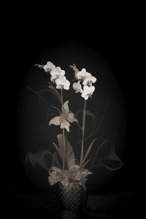 Flower 5561.003 - M K Miller III