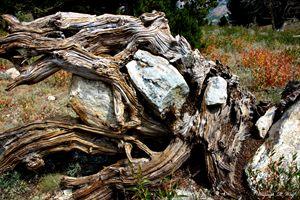 Rock N' Tree