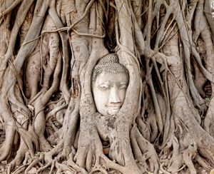 Entangled, Thailand