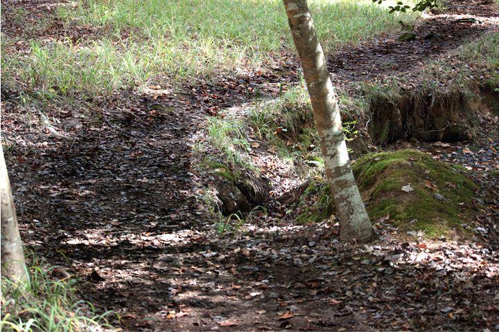 Dirt Path - Gallery 1