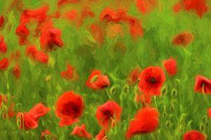 Poppyflower II