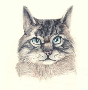 The kitty - Zoe C's Art