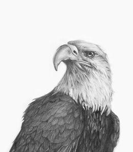 Eye of the Eagle - Zoe C's Art