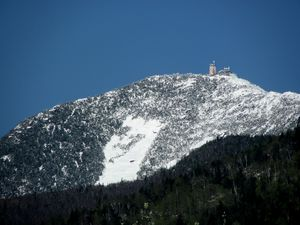 Majestic Whiteface