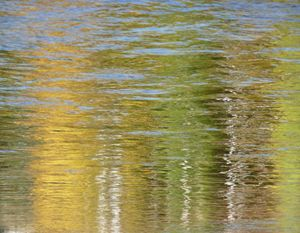 Golden Birch Reflections by Surfclaw