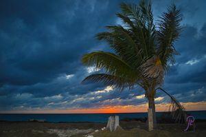 Coconut Tree @ Sunset