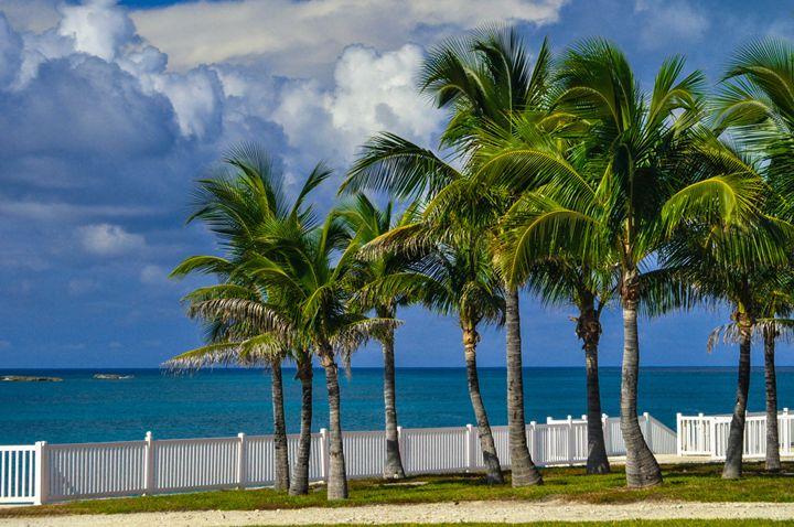 3 Sisters Coconut Trees Bimini Bahs. - Lyle Saunders Photography