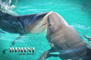 Kissing Sharks