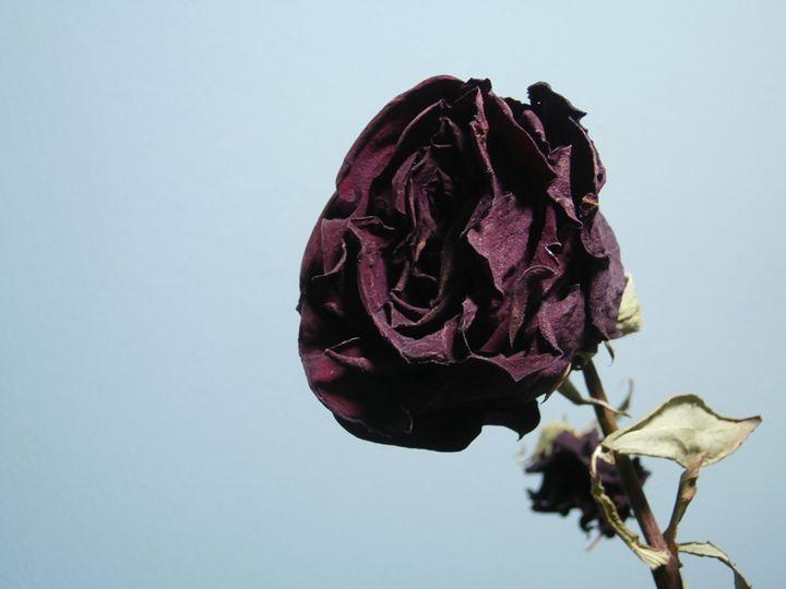 Purple Rose - Soulluring