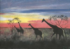 Sunset On Giraffes