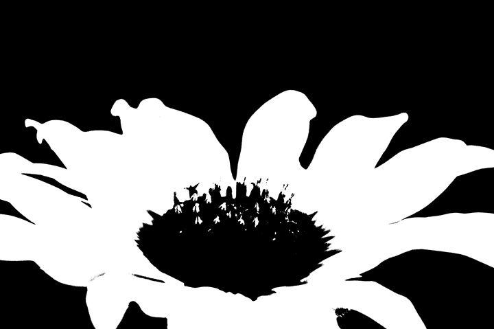 Ash Fork Sunflower - Jesse Ladig