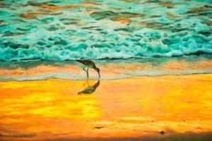 Cocoa Beach Plover Art