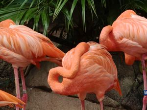 Flamingo - Artistic Independency