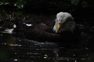 Bathing in Freedom