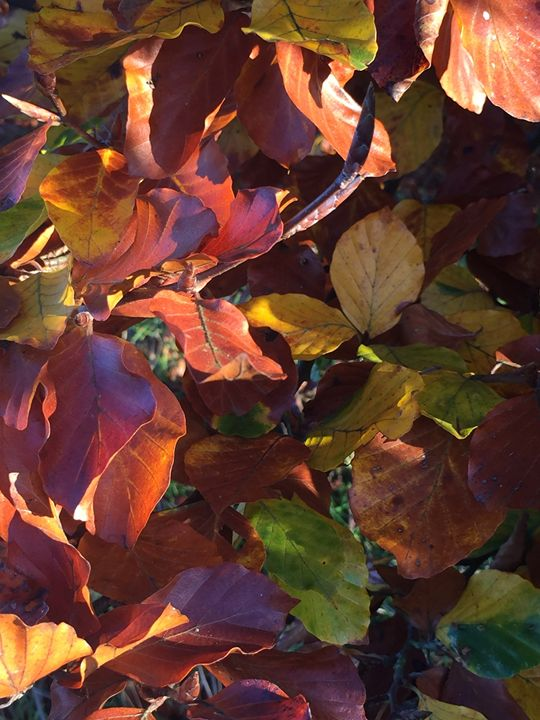 Autumn leaves - England Photography