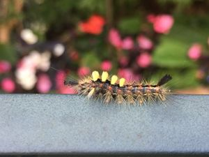 Caterpillar - England Photography