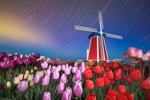 Star trails, windmill and tulips