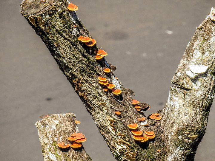 Dead Tree Mushroom Stairs - Ian Labre