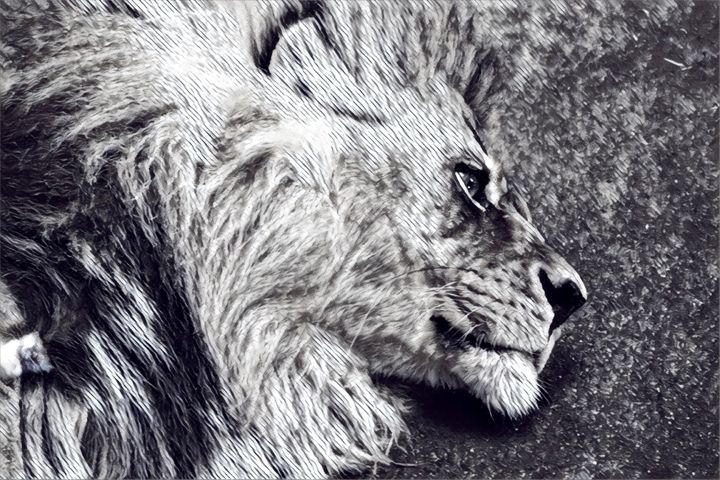 Lion Sideview - LilArtsyShell