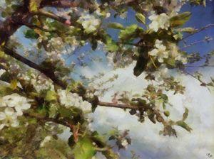 Apple Blossom Sky - Impressionisms