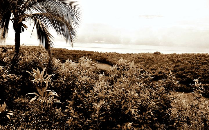 Maui View (Sepia) - Amber's Amazing Art