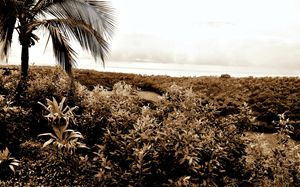 Maui View (Sepia)