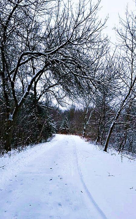 Winter Trail - Amber's Amazing Art