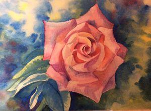 First pink rose.