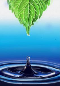 Leaf and drop