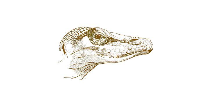 Lizard - MoodswingsPrints