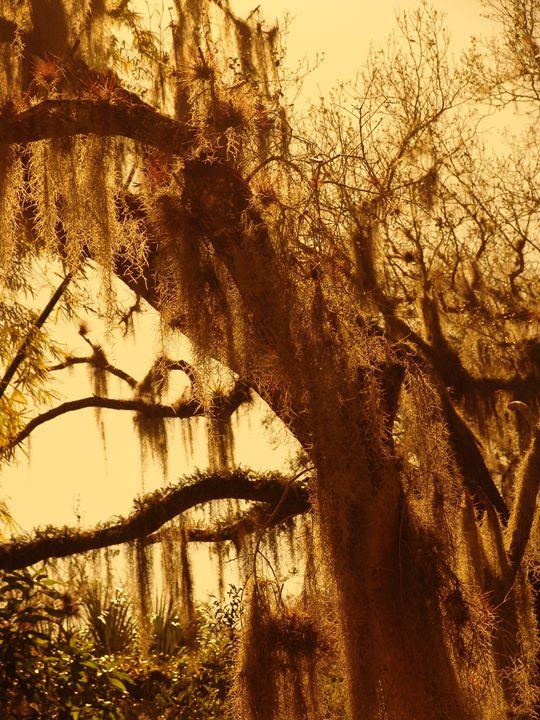 Moss covered Beauty - Lens Art By Florene
