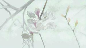 Inspire flower