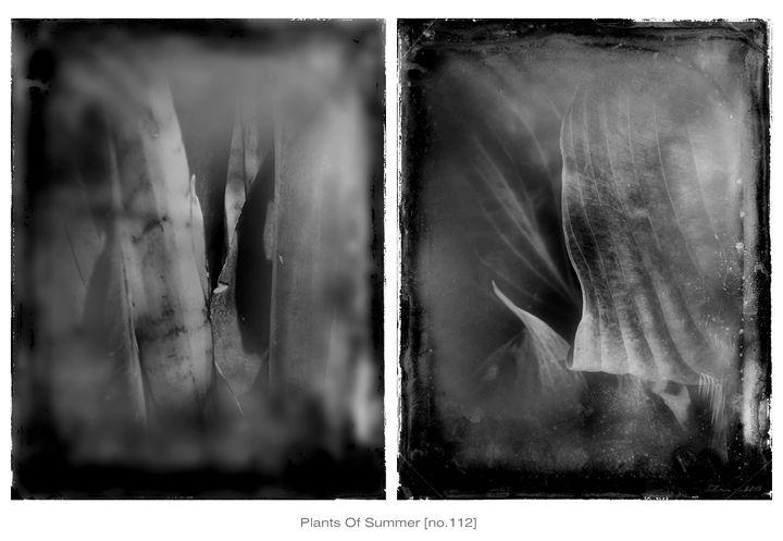 Plants Of Summer {no.112} - Solomon Walker Designs