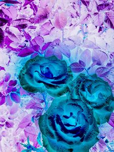 Ephemeral Roses