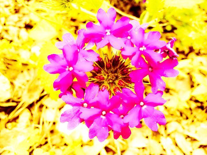 Floral Flourishing - Zynergy